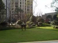 出售上城公馆白坯3室2厅2卫139平米165万住宅