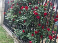 出售塔山花园单体别墅5室2厅2卫300.04平米465万住宅